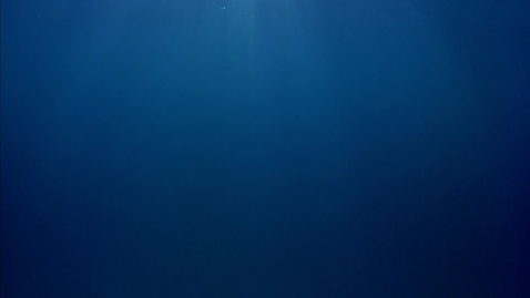 Thumbnail for entry SchoolTube HD Sample - Dolphins (IMAX)