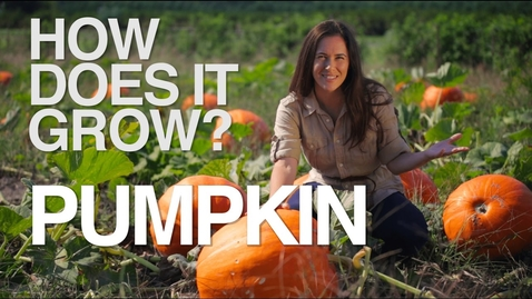 Thumbnail for entry PUMPKIN | How Does it Grow?
