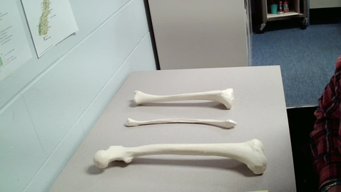 Thumbnail for entry Femur and Tibia Lesson
