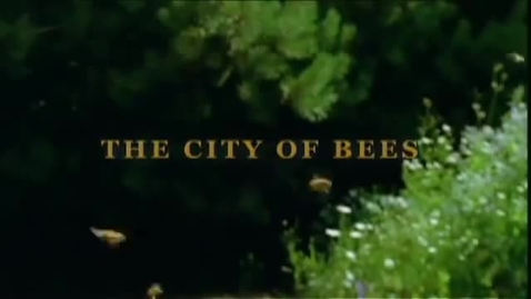 Thumbnail for entry City of Bees