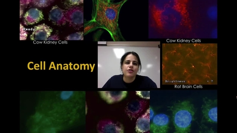 Thumbnail for entry Cell Anatomy (Unit 1-Video 6)