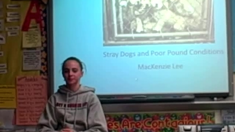 Thumbnail for entry Stray Dogs and Poor Pound Conditions