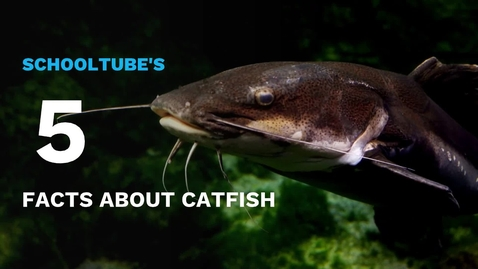 Thumbnail for entry SchoolTube's 5 Facts About Catfish