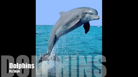Thumbnail for entry Skye's Dolphins