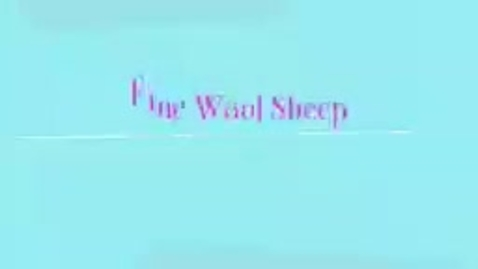 Thumbnail for entry Fine Wool Sheep
