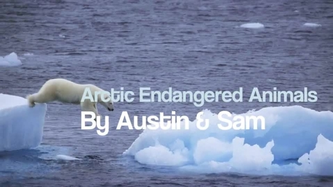 Thumbnail for entry Endangered Arctic Animals