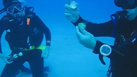 Thumbnail for entry Underwater Eggs
