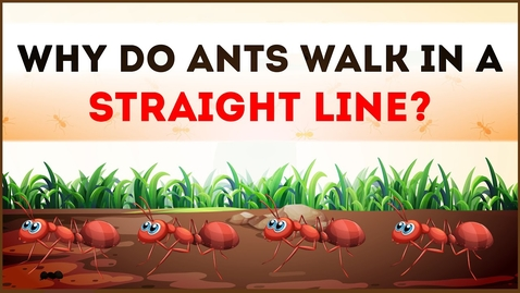 Thumbnail for entry Why do Ants walk in a Straight Line? | Science Curiosity | Letstute