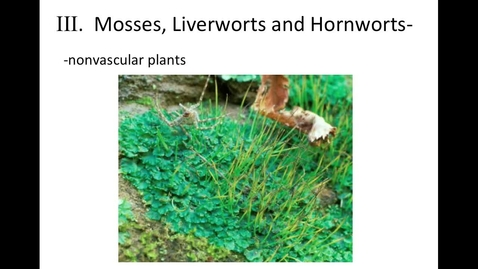 "Thumbnail for entry Unit 10, Section 3 ""Mosses, Liverworts, Hornworts"""