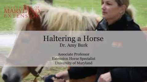 Thumbnail for entry How to Halter a Horse
