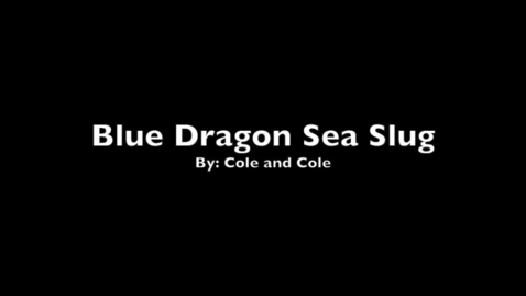 Thumbnail for entry The Blue Dragon Sea Slug