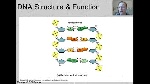 Thumbnail for entry DNA Structure & Function