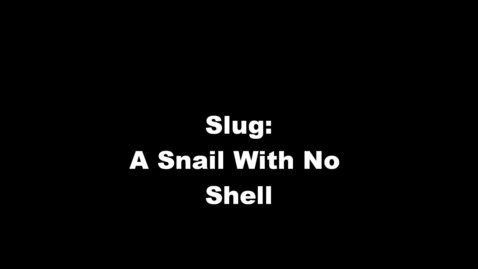 Thumbnail for entry Slug: A Snail With No Shell