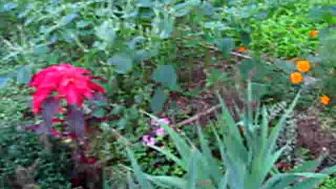 Thumbnail for entry Korean Gardens 24