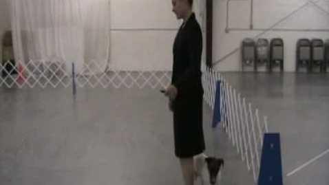 Thumbnail for entry 4-H Dog Showmanship
