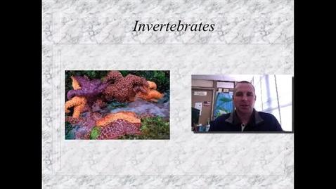 Thumbnail for entry Invertebrates