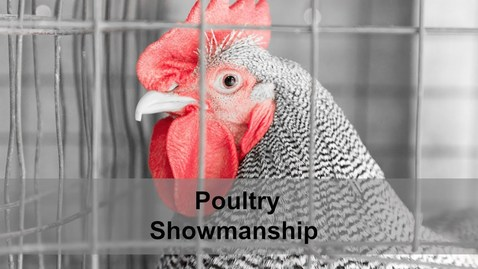 Thumbnail for entry 4-H Poultry Showmanship