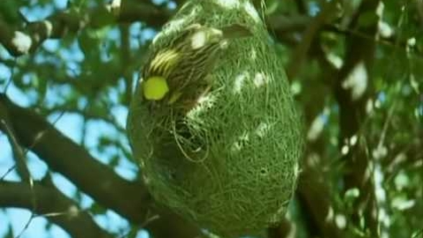 Thumbnail for entry BBC Home Making: Weaver Bird