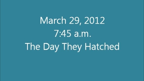 Thumbnail for entry The Day They Hatched