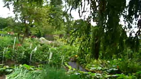 Thumbnail for entry Korean Gardens 21