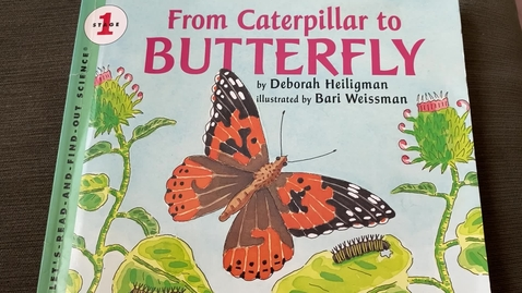Thumbnail for entry From Caterpillar to Butterfly