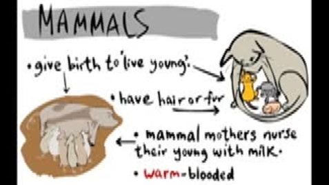 Thumbnail for entry Animal Classification