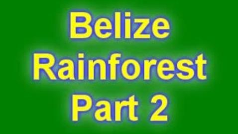 Thumbnail for entry rainforest plants part 2