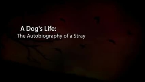 Thumbnail for entry A Dog's Life
