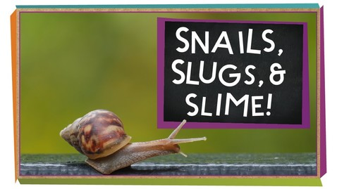 Thumbnail for entry Snails, Slugs, and Slime! | Animal Science for Kids