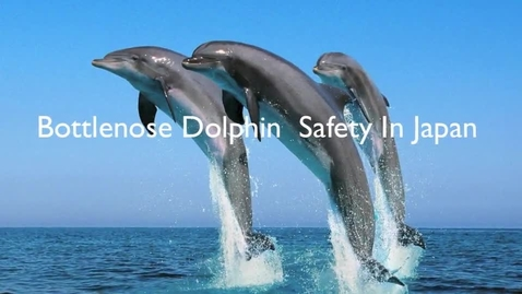Thumbnail for entry Bottlenose Dolphin Safety in Japan