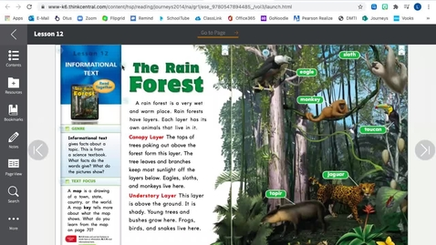 Thumbnail for entry The Rain Forest