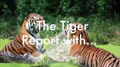 Thumbnail for entry 2018 03 02 Tiger TV