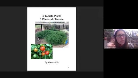 Thumbnail for entry 3 Plantas de Tomate
