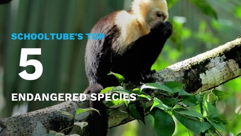 Thumbnail for entry SchoolTube's Top 5 Endangered Species