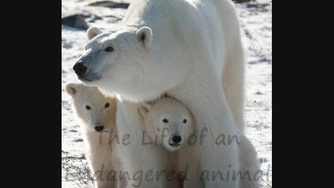 Thumbnail for entry Polar bears by Natalie and Edith