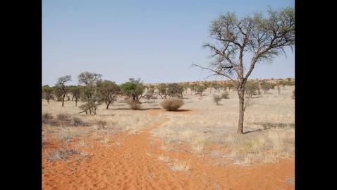 Thumbnail for entry The Bushmen of the Kalahari... by Arlindo Veríssimo
