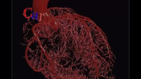 Thumbnail for entry Blood Vessels pt 4 - Auto & Neural Regulation