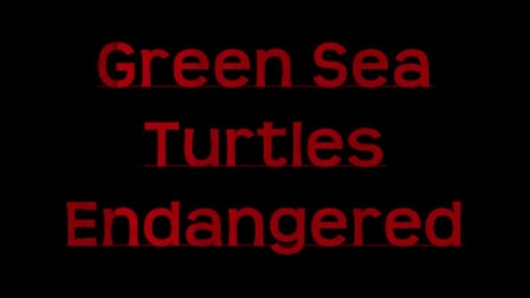 Thumbnail for entry Green Sea Turtles by Hannah and Cyrielle