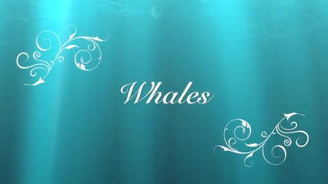 Thumbnail for entry Whales