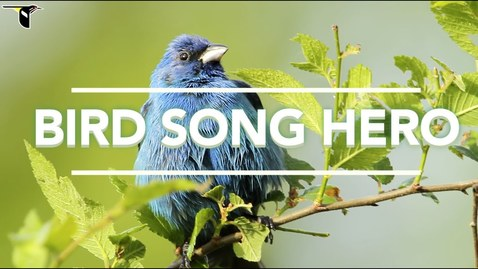 Thumbnail for entry Bird Song Hero: The song learning game for everyone