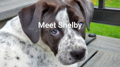Thumbnail for entry Meet Shelby