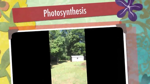 Thumbnail for entry Photosynthesis