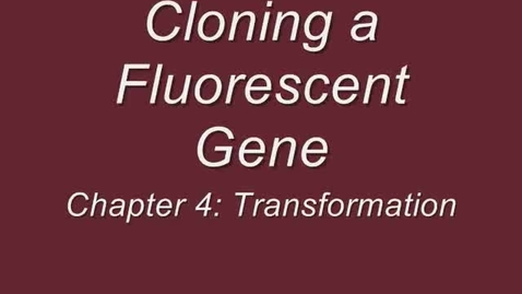 Thumbnail for entry Cloning a Fluorescent Gene: Chapter 4 - Transformation