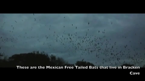 Thumbnail for entry Bracken Bats Video