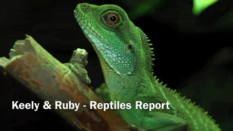 Thumbnail for entry Reptile Report