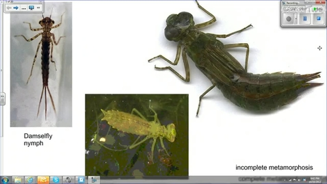 Thumbnail for entry Wetland Insects