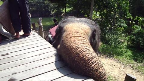 Thumbnail for entry Wet Elephant Thailand