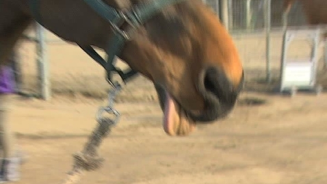 Thumbnail for entry GHCHS Equestrian Show #3 1-15-12
