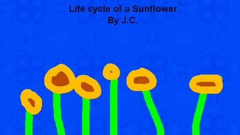 Thumbnail for entry Life Cycle of a Sunflower