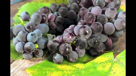 Thumbnail for entry Hebrew Language - Grapes